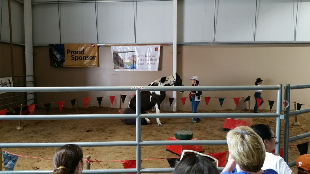 horse sitting in a performance